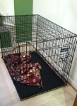 Rico's new crib.